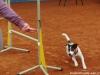 agi-intenzivka-01-02-2012-003