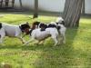 Petrin-s-Aimy-Beebou-a-Spikem-29.12.2012-030