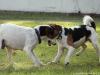 Petrin-s-Aimy-Beebou-a-Spikem-29.12.2012-031