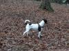 Pruhonicky-park-s-Aimy-a-Archiem-30.12.2012-002