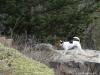 Pruhonicky-park-s-Aimy-a-Archiem-30.12.2012-005