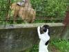 Albi-u-nas-06-2009-014