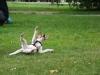 Sraz-v-Grebovce-06-2009-052