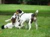 Sraz-v-Grebovce-06-2009-060