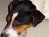 Archie-navsteva-26.5.-023