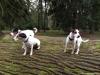 archie-pruhhonicky-park-21-12-2013-021