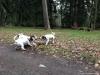 archie-pruhhonicky-park-21-12-2013-024
