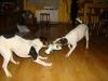 archie-u-nas-12-2009-023