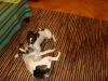 archie-u-nas-12-2009-062