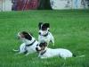 archie-grebovka-07-2009-046