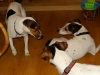 Butch-na-skok-v-ChS-12.-16.11.2013-008-