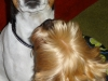 chico-01-2012-004