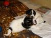 Ficci-v-nove-ohradce-2009-055