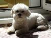 Fici-na-navsteve-2009-065