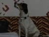 morava-01-2012-004