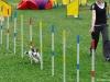 agility-tabor-nove-hrady-2014-661