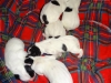 porod-20-11-2012-015