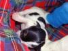 porod-20-11-2012-023_0