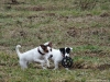 02-coursing-a-hukvaldy-12-1-2014-010