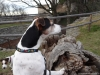 02-coursing-a-hukvaldy-12-1-2014-071