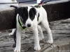 02-coursing-a-hukvaldy-12-1-2014-074