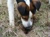 pribram-03-2011-012