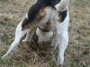 pribram-03-2011-017