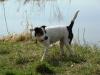 pribram-04-2011-003
