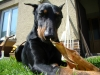 brandy-a-elfik-2010-011