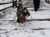 roznov-01-2012-002
