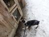 roznov-01-2012-007