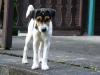 albi-sadska-2009-076