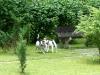 Setkani-s-Benjim-podruhe-7.7.2013-001-