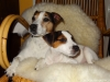 Baileys 3-4 mesice 004