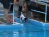 03-WaterDogs-09-2012-1