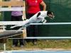 03-WaterDogs-09-2012-7