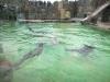 zoo-praha-26-3-013
