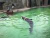 zoo-praha-26-3-028