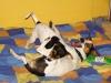 Albi-u-nas-06-2009-038