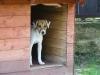 angie-chyska-07-2009-051
