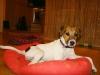 angie-07-2009-093