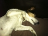 brandy-u-archieho-7-10-2012-004