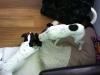 brandy-u-archieho-7-10-2012-008