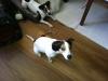 brandy-u-archieho-7-10-2012-010