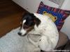 Archie-navsteva-26.5.-010