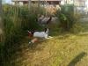 archie-nove-hrady-2011-005