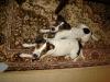 archie-u-nas-12-2009-052