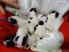 porod-20-11-2012-002-1_0