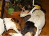 Butch-na-skok-v-ChS-12.-16.11.2013-006-