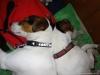 Butch-na-skok-v-ChS-12.-16.11.2013-021-